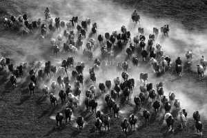SIPC Merit Award - Xiping An (China)  Galloping Horse