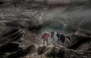 PhotoVivo Gold Medal - Sze-Wah Chee (Singapore)  Bromo Horse Sunrise