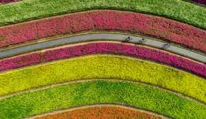 Circuit Merit Award e-certificate - Peide Yuan (China)  Through The Flowers