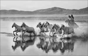 APU Honor Mention e-certificate - Phillip Kwan (Canada)  Horses In Water 88