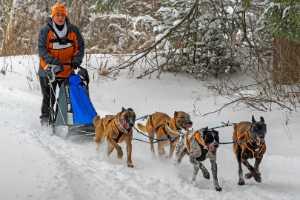 FIP Ribbon - Betty Chan (Canada)  Orange Dog Sled
