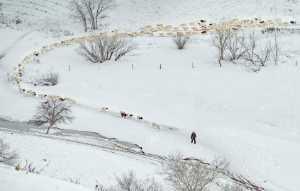 PhotoVivo Gold Medal - Chonghua Miao (China)  On The Snowfield