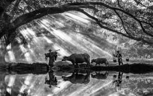 PhotoVivo Honor Mention e-certificate - Xiu Liu (China)  Morning Pasture