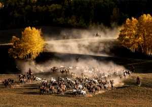 ICPE Gold Medal - Hung Kam Yuen (Australia)  Team Of Horse Herding