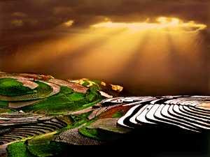 ICPE Gold Medal - Tong Hu (China)  Gold Sprinked Wart
