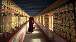 APU Honor Mention E-Certificate - Zhuoyan Lin (China)  Lama
