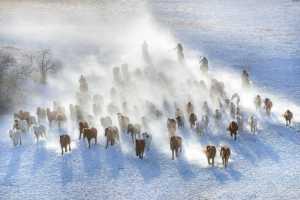 PhotoVivo Gold Medal - Zhesheng Zhuang (China)  Lasso Horses 2