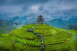 FIP Ribbon - Hanping He (China)  Full Of Green