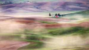 PhotoVivo Gold Medal - Philip Chan (Canada)  Morning Fog At Wheatfield