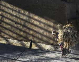 PhotoVivo Gold Medal - Xuefeng Huang (China)  Morning Light