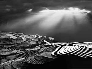 PhotoVivo Gold Medal - Tong Hu (China)  The Light Vof The Plateau