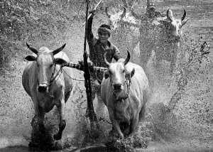 GTPC Merit e-certificate - Huu Hung Truong (Vietnam)  Racing Cow