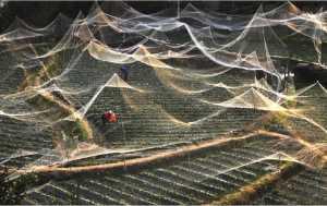 PhotoVivo Gold Medal - Yun Ao (China)  The Net Of Dream