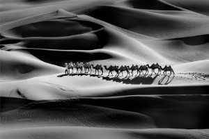 ICPE Honor Mention e-certificate - Jiangchuan Tong (China)  Camel Shadow