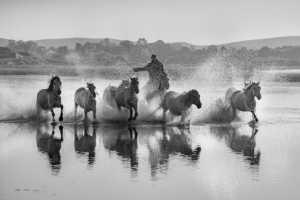 APAS Gold Medal - Fuyong Xu (China)  Running Horse