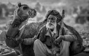 APAS Honor Mention e-certificate - Guisen Li (China)  Camel Old Man 022