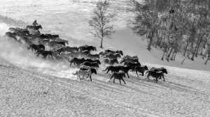 PhotoVivo Gold Medal - Xilian Li (China)  Horses 2