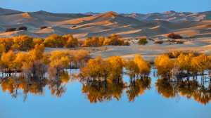 APU Honor Mention e-certificate - Jianshe Li (China)  Desert Oasis 1