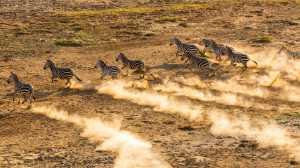 PhotoVivo Gold Medal - Yong Lin (China)  Zebra On The Grassland