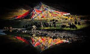 APAS Gold Medal - Jingming Wu (China)  Plateau Pasture
