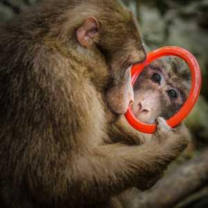 PhotoVivo Gold Medal - Qiang Deng (China)  Look Into Mirror