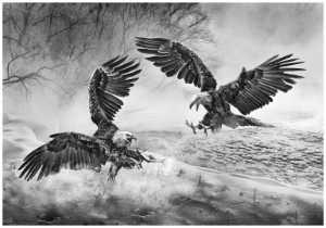 PhotoVivo Gold Medal - Sally Leung (Hong Kong)  Eagle Battle