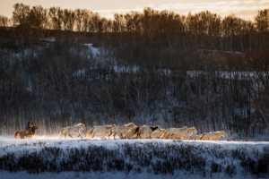APU Gold Medal - Fuyong Xu (China)  The Dam Of Winter1