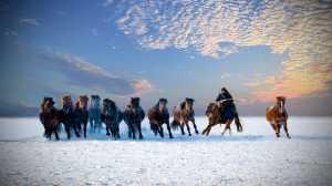 APU Honor Mention e-certificate - Hugo Chan (USA)  Lasso Horses