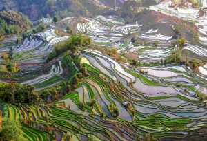 APAS Gold Medal - Hong Yang (China)  Rhyme Of Land