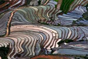 PhotoVivo Gold Medal - Thach Hoang Ngoc (Vietnam)  Rice Terraces In Vietnam