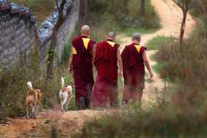 Circuit Merit Award e-certificate - Srikanta H Byakod (India)  Walking Lamas