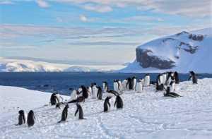 PhotoVivo Honor Mention e-certificate - Volker Meinberg (Germany)  Trinity Island Antarctica 6