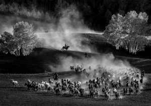 APU Gold Medal - Hung Kam Yuen (Australia)  Song Of Horse Herding