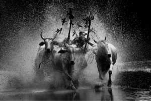 APU Winter Gold Medal - Xuan Han Nguyen (Vietnam)  Bull Racing
