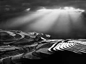APAS Gold Medal - Tong Hu (China)  Light Of The Plateau