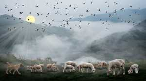 Circuit Merit Award e-certificate - Kim Yiang Chng (Singapore)  Flock Of Sheep 1