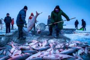 PhotoVivo Gold Medal - Chongfeng Wu (China)  Winter Fishing 9