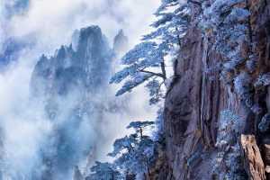 PhotoVivo Gold Medal - Hong Sang Woo (Malaysia)  Cedar Tree