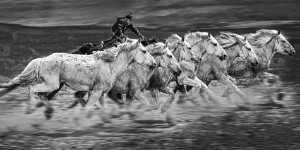 PhotoVivo Gold Medal - Juanjuan Shen (China)  Fine Horse Pentium