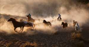 Circuit Merit E-cert - Henry Ng (USA)  Run, Horse, Run