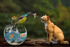 APU Winter Merit Award E-Certificate - Siew Thong Chu (Malaysia)  Cat And Its Food