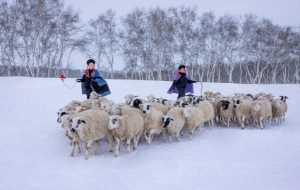 PhotoVivo Gold Medal - Yichi Wang (China)  Winter Herd