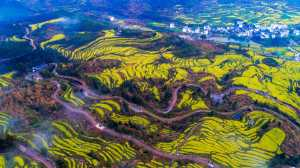 APAS Honor Mention - Chengle Zheng (China)  Spring Color Of The Earth