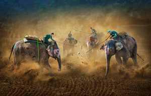 Circuit Merit E-cert - Arnaldo Paulo Che (Hong Kong)  Chitwan Elephant Festival 2