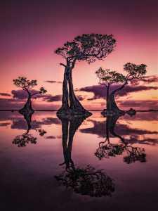 Circuit Merit Award e-certificate - Hsiang Hui (Sylvester) Wong (Malaysia)  Dancing Tree At Dawn