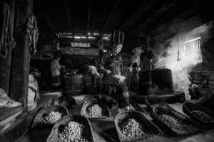 PhotoVivo Gold Medal - Ting Hua (China)  Cook Beans