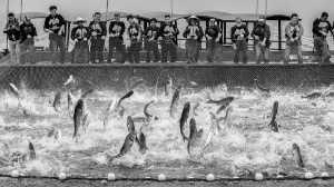 APAS Gold Medal - Kunping Chen (China)  Joyous People And Jumping Fish