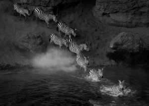 Circuit Merit Award e-certificate - Jie Fischer (USA)  Migrating Zebras
