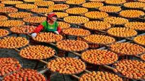 PhotoVivo Honor Mention e-certificate - Su Jong Wang (Taiwan)  dried persimmon