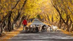 Circuit Merit Award e-certificate - Han Kim Teo (Singapore)  Goats Need Moring Walk